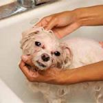 Cómo ahuyentar las garrapatas de los perros: tres pasos, productos