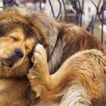 Cómo detectar garrapatas en perros: síntomas, quitar