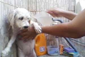 Cómo eliminar garrapatas de los perros
