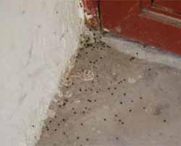 Detectar garrapatas archivos c mo eliminar garrapatas - Como matar pulgas en casa ...