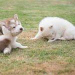 Cómo se contagian las garrapatas en los perros: dónde se alojan