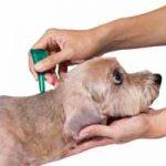 Antipulgas: cuáles son los mejores para eliminar pulgas de tu mascota