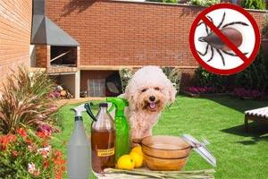 veneno para garrapatas en perros casero bicarbonato de