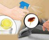 Cómo evitar las pulgas en los perros y en casa: prevenir con remedios caseros