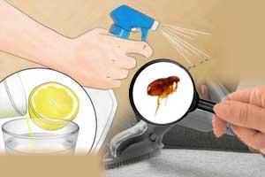 Enfermedades de garrapatas en perros s ntomas tratamiento - Como eliminar las pulgas de casa remedio casero ...