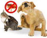 Cómo quitarle las pulgas a un perro y gato: rápido, con remedios caseros