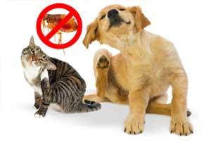 Cómo quitarle las pulgas a un perro y gato